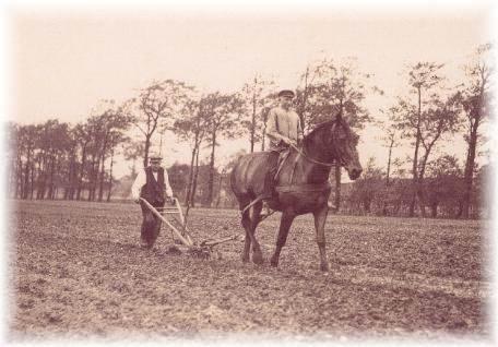 Unkrautbekämpfung mit der Pferdehacke