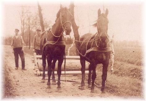 Pferde & Kutscher bei der Arbiet