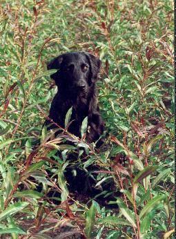 Cleo und die Weiden