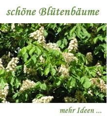 Baumschule Eggert baumschule eggert blütensträucher baumschulen heckenpflanzen bäume