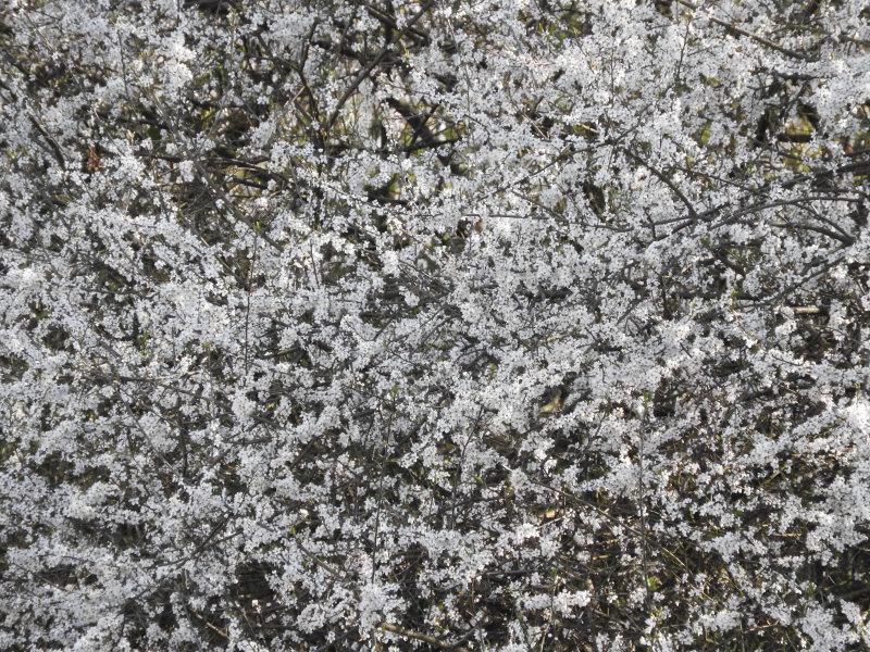 gras kurz schneiden frost obstbäume