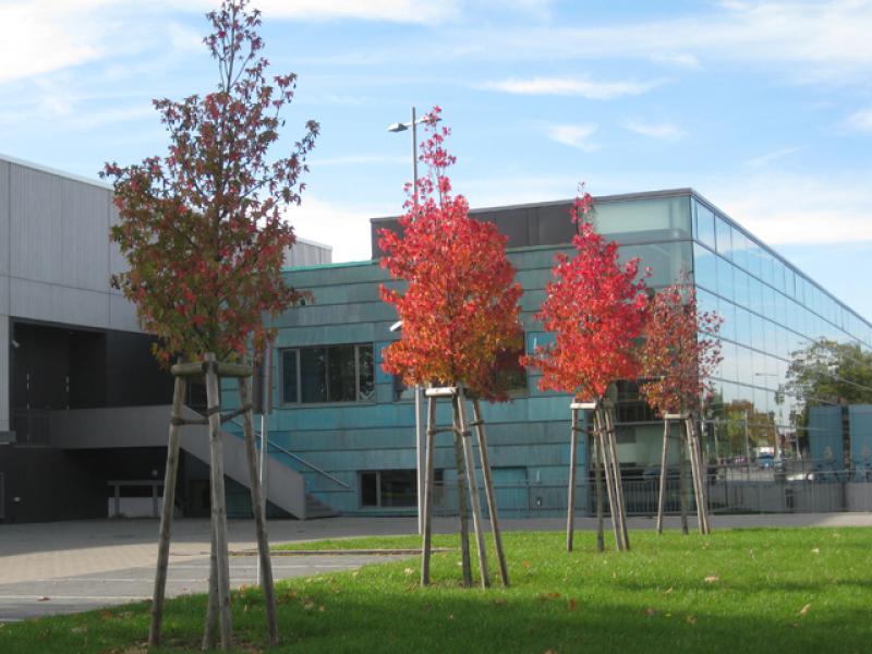 Fabelhaft Amberbaum, Liquidambar styraciflua in der Baumschule Eggert online @UX_22